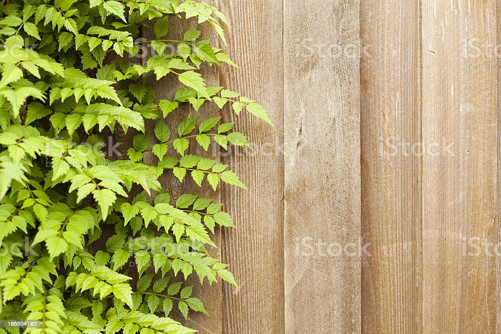 Vine and Fence Background royalty-free stock photo
