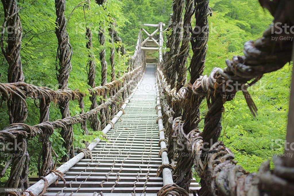 Vine bridge in the forest stock photo