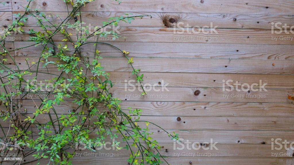 Vine creeping on the garden wall stock photo