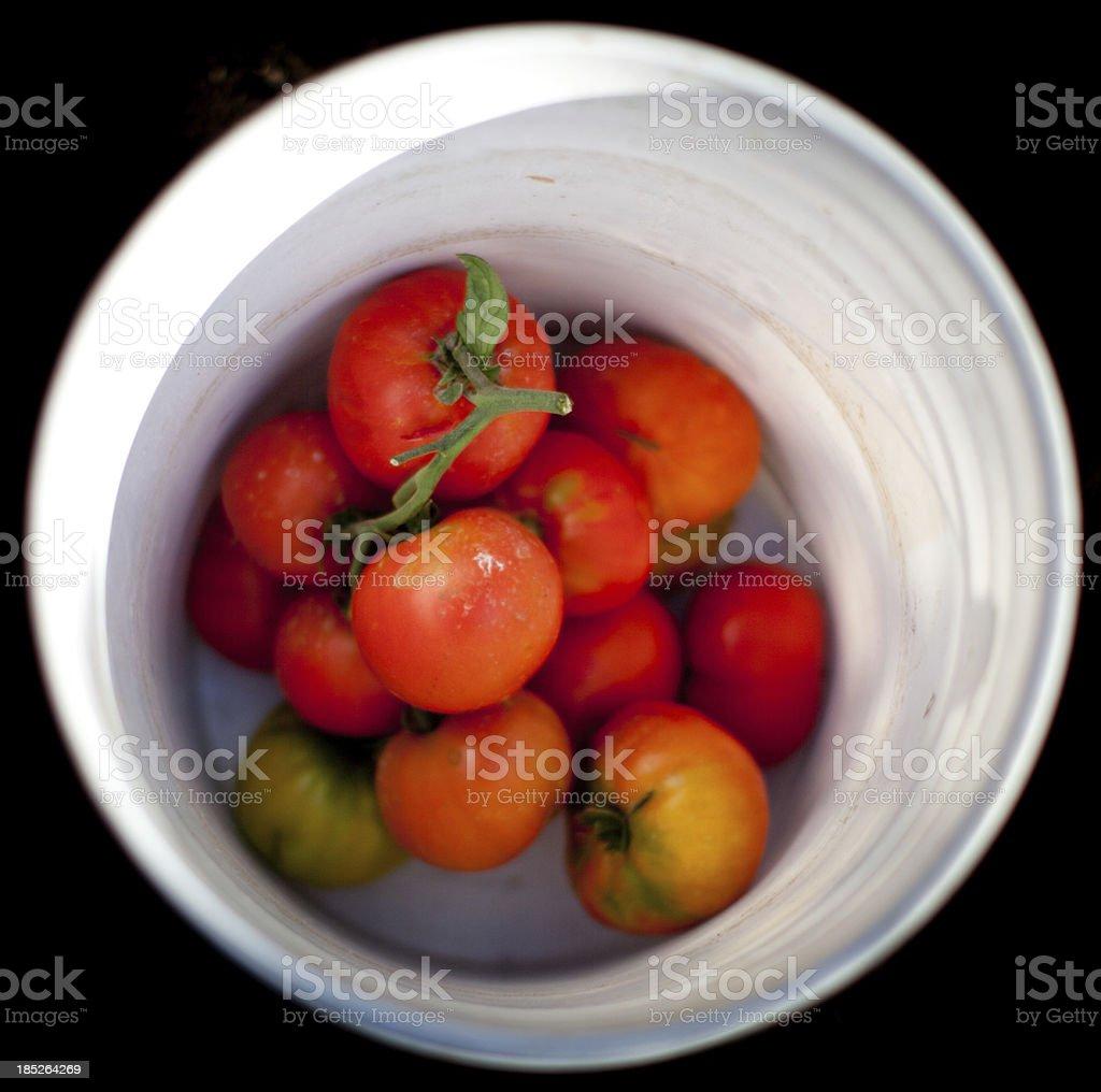 Vine ripened organic tomatoes in a bucket stock photo