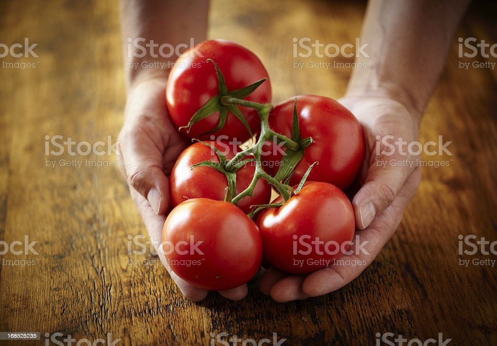 Vine ripened tomatoes stock photo