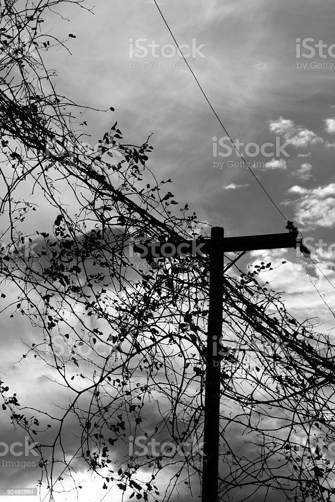 Vine Silouhette Powerlines stock photo