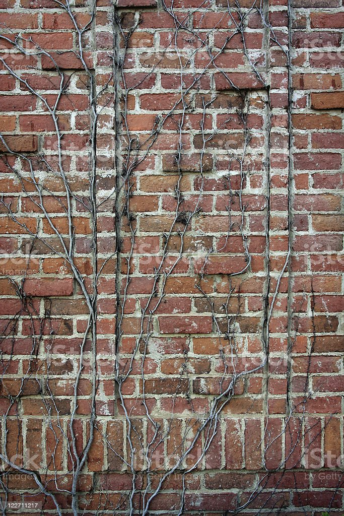Vine-covered brick wall royalty-free stock photo
