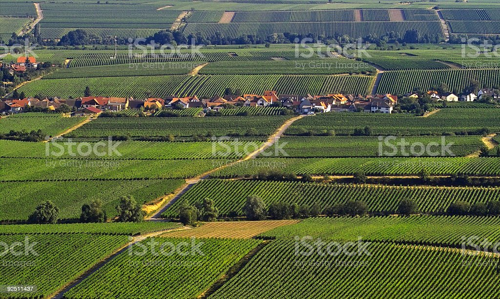 Vinefields royalty-free stock photo