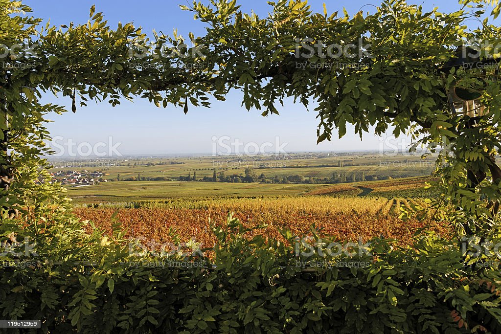 Vinery in Rhineland-Palatinate / Germany stock photo