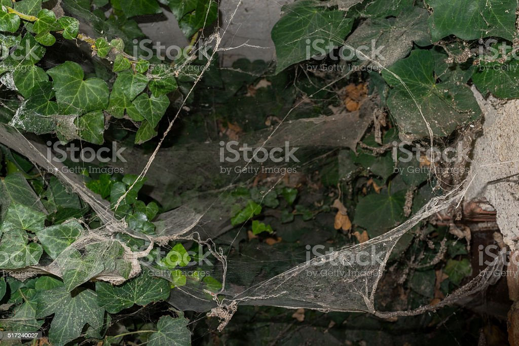 Vines and cobwebs in Langhe (Unesco World Heritage site) stock photo