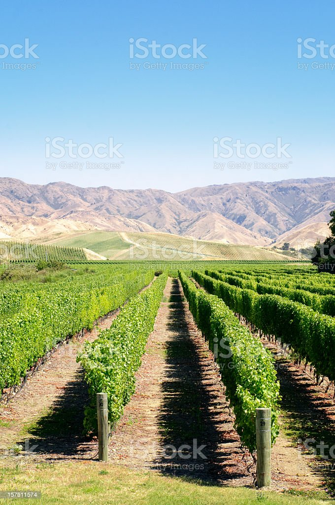 Vines and Mountains stock photo