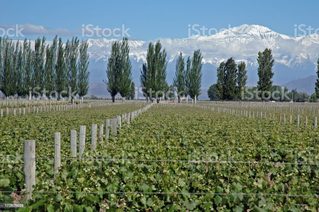Vines & Andes II royalty-free stock photo
