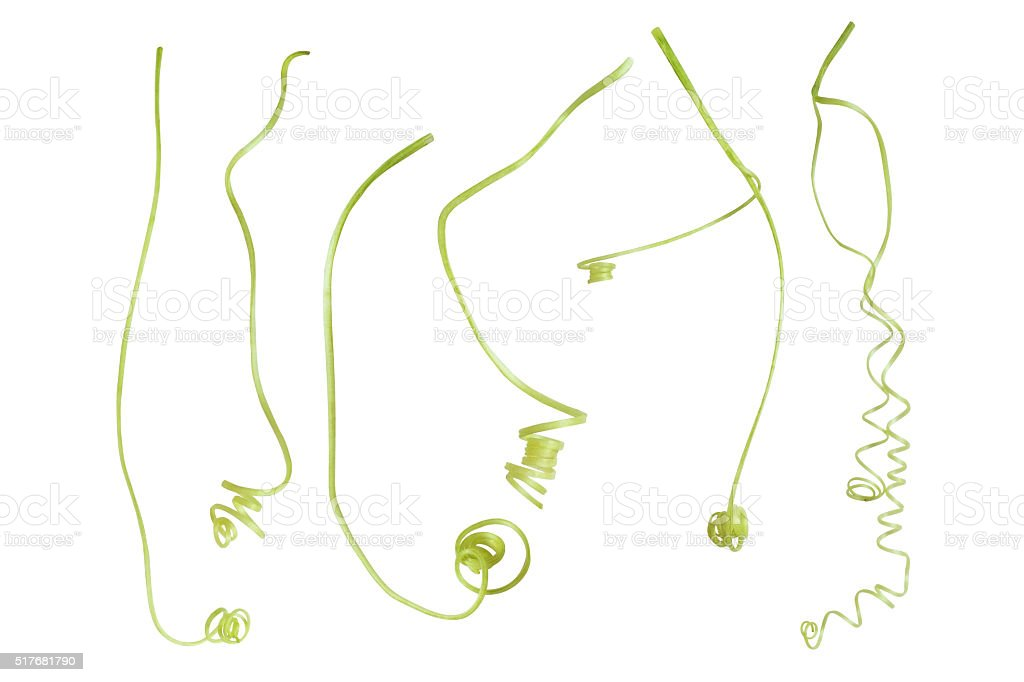 Vines, climbing plant tendrils isolated on white background, cli stock photo
