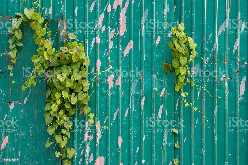 Vines creeping through sheet metal stock photo