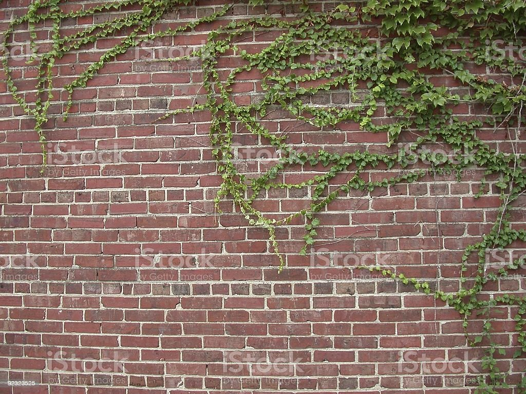 Vines on brick wall royalty-free stock photo