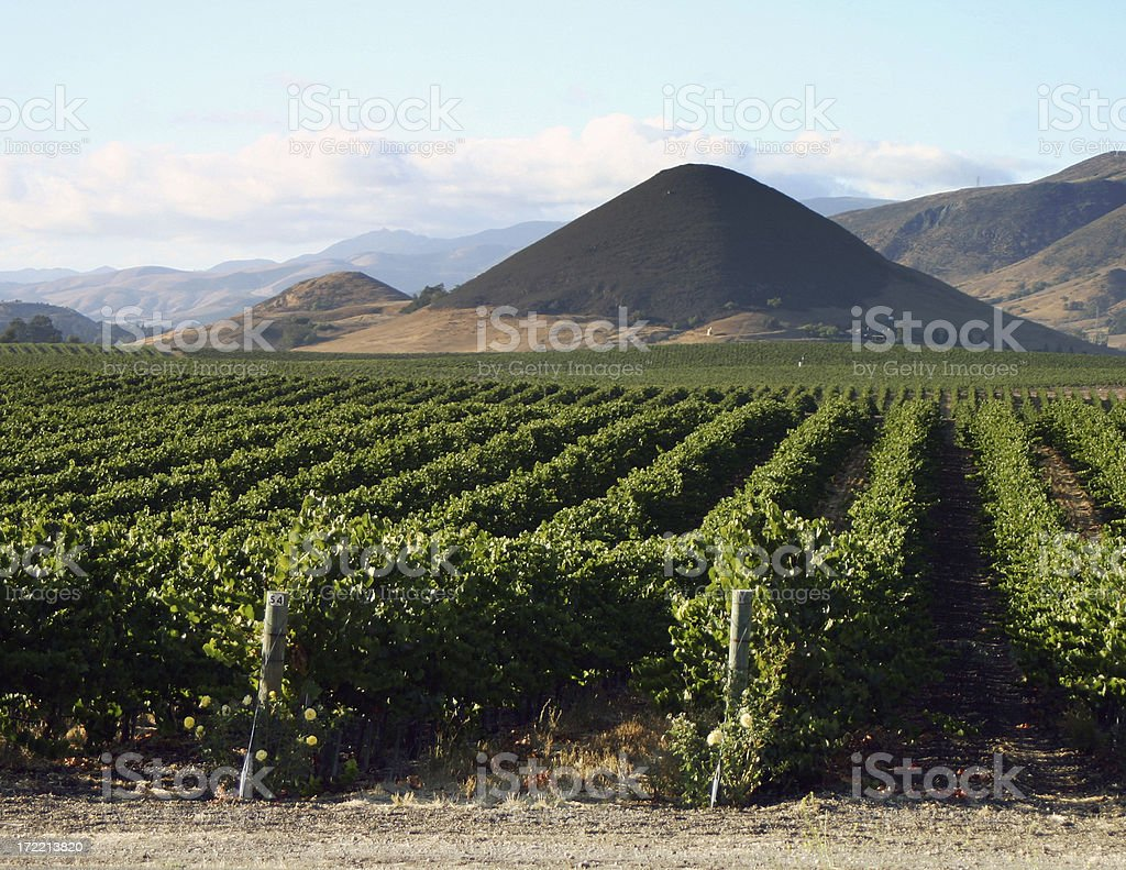 Vineyard 2 stock photo