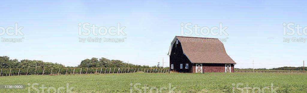 Vineyard and Barn Panoramic stock photo