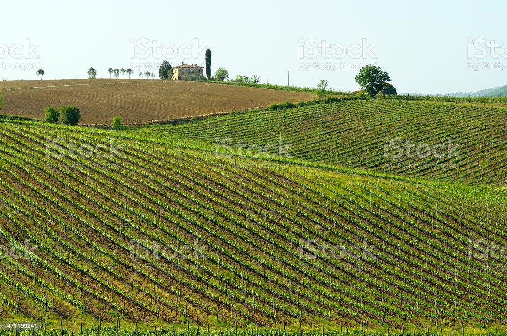 Vineyard and farmhouse in Tuscany royalty-free stock photo