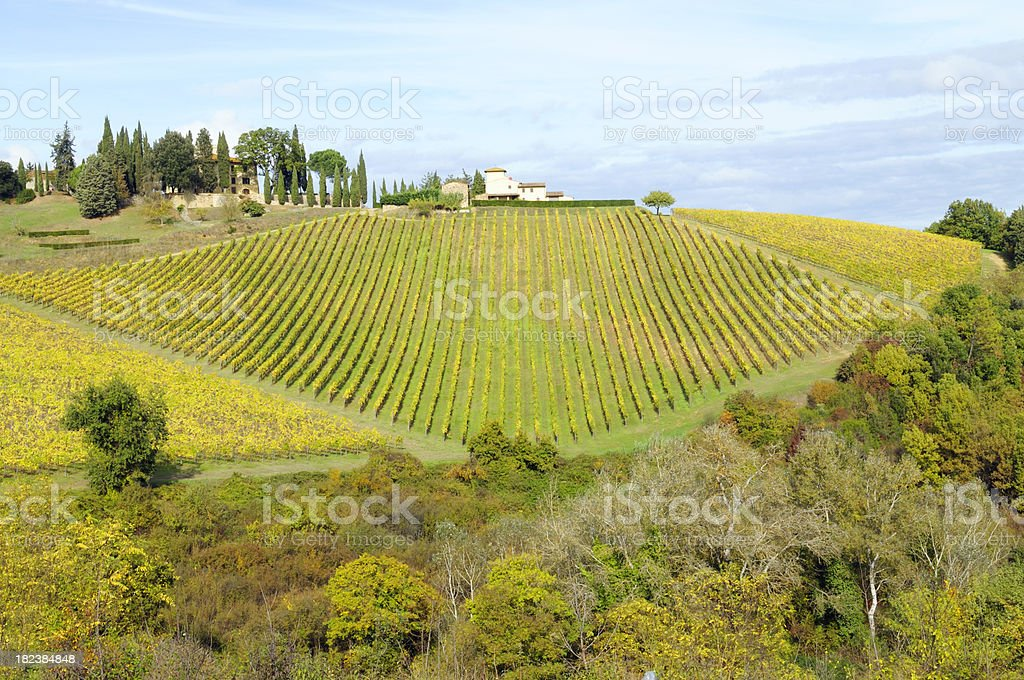 Vineyard and Farmhouse royalty-free stock photo