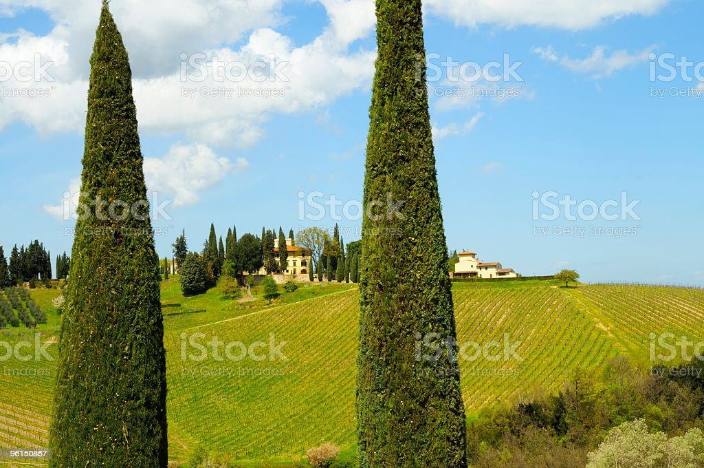 Vineyard and farmhouse stock photo