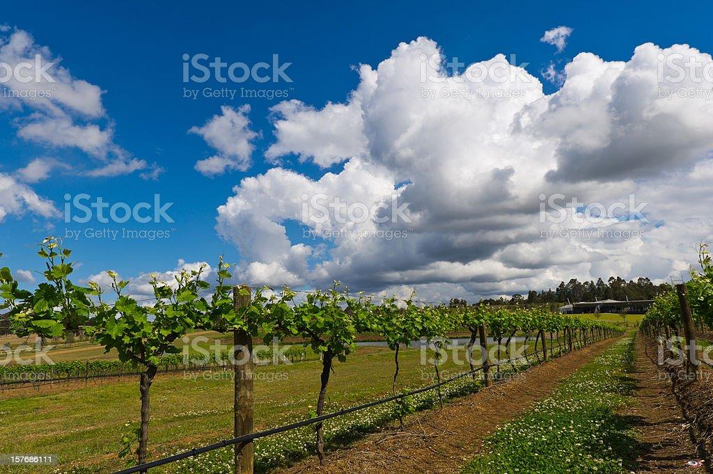 Vineyard and fields stock photo