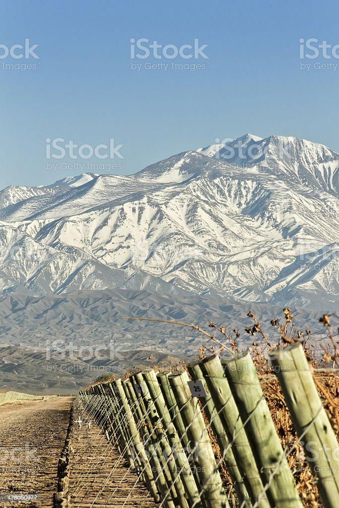 Vineyard and mountain royalty-free stock photo
