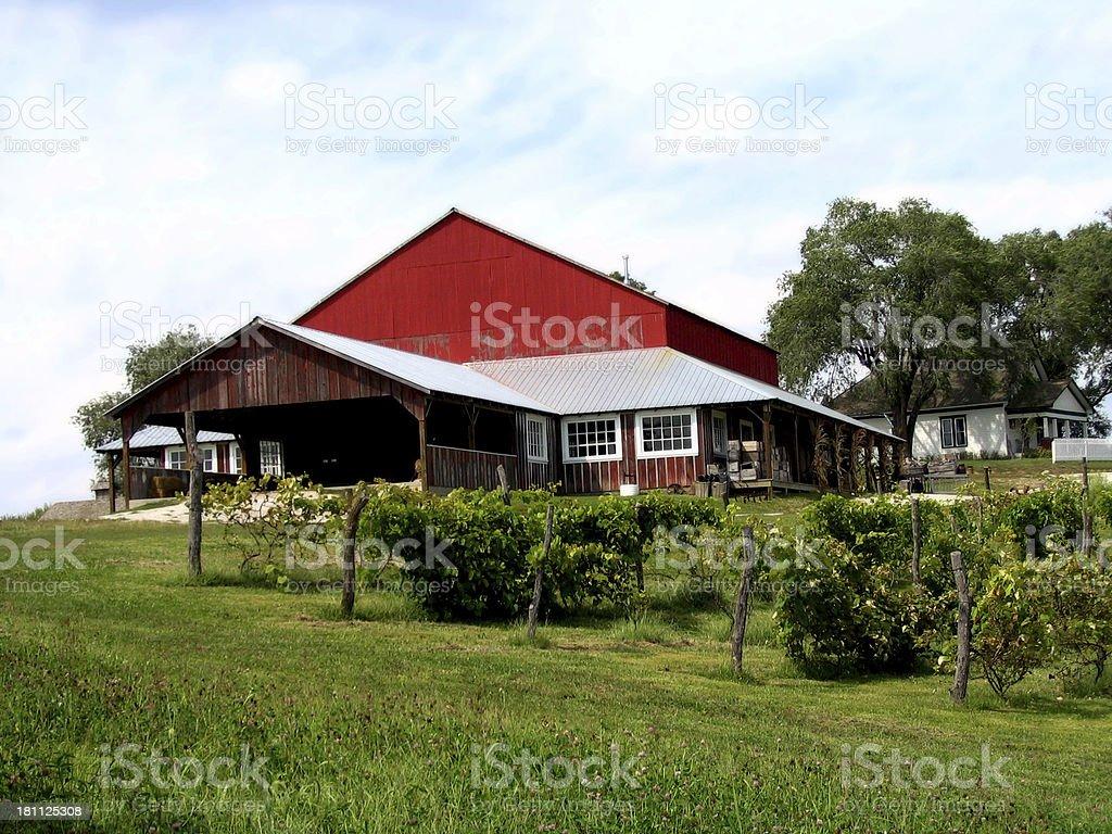 Vineyard and Red Barn stock photo