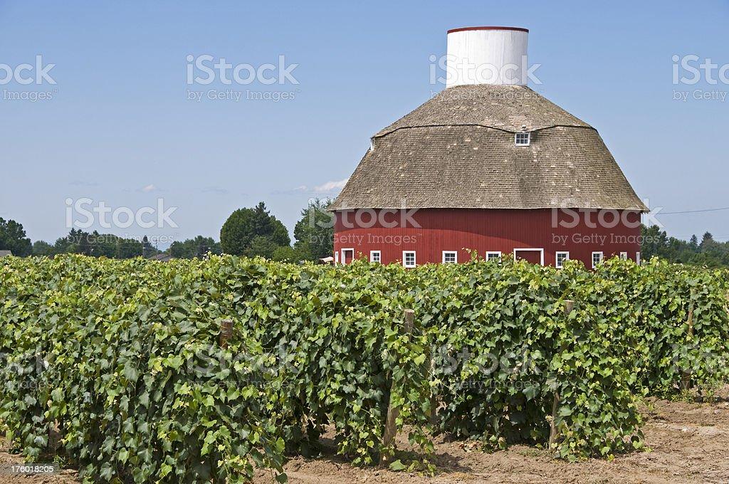 Vineyard and round barn royalty-free stock photo