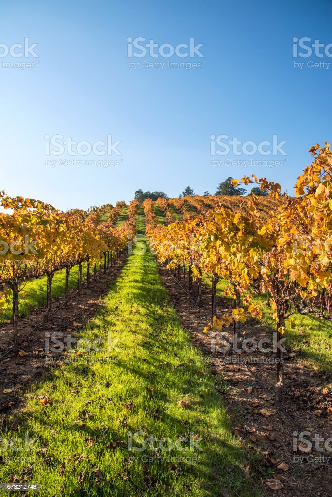 Vineyard and sky stock photo