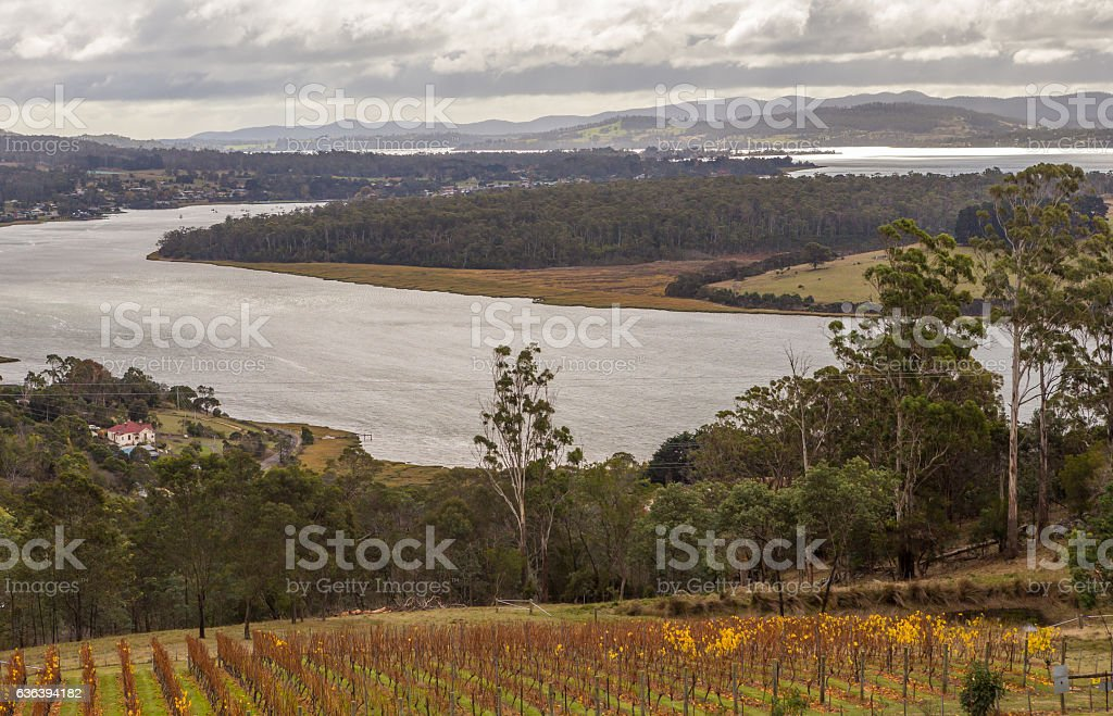 Vineyard and winery on Tamar riverside from Bradys Lookout, Tasmania stock photo