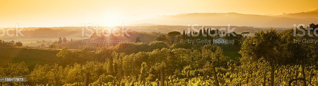 Vineyard at Chianti Region hills on sunset in Tuscany royalty-free stock photo
