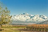 Vineyard at foot of The Andes