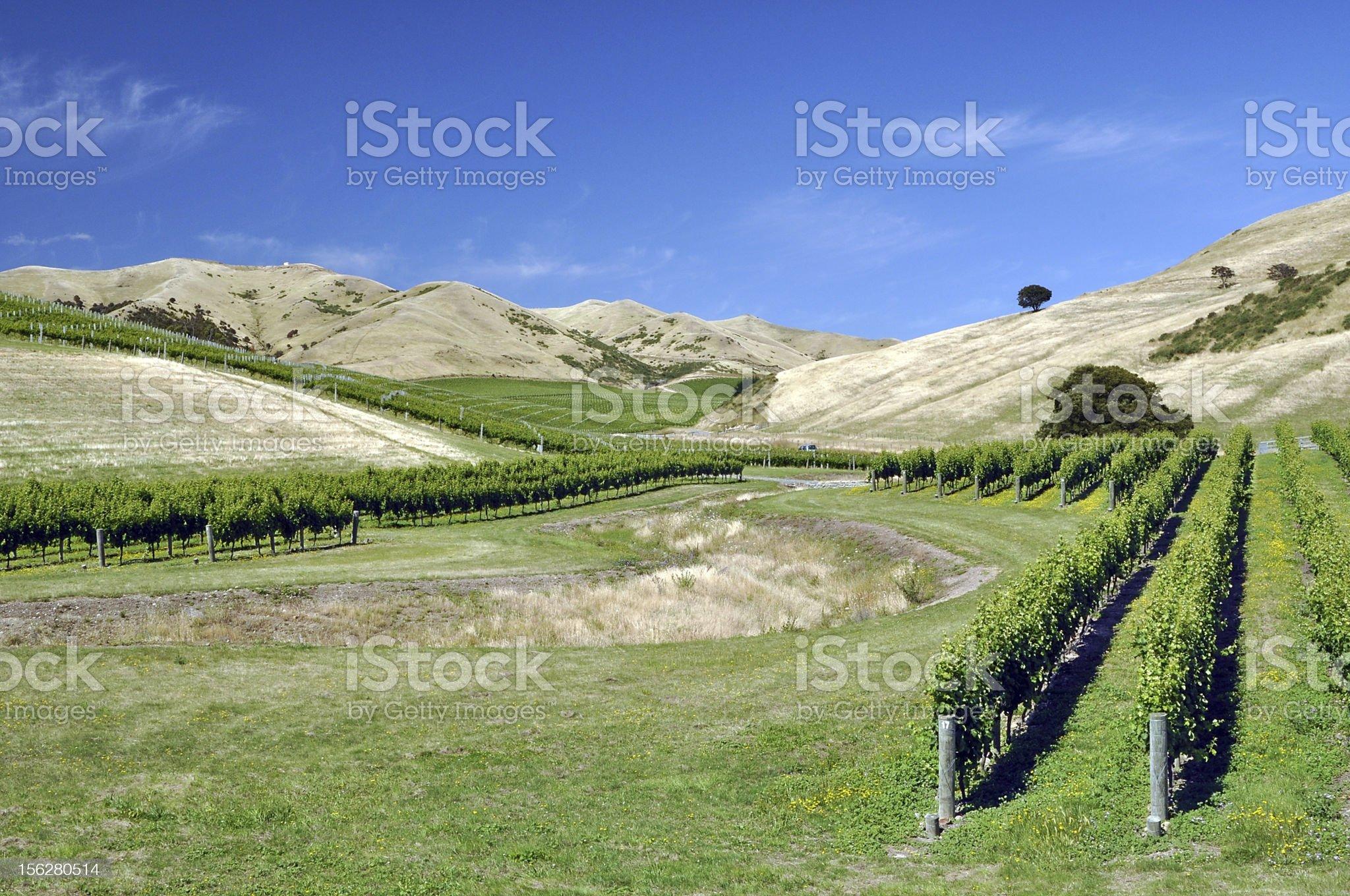 Vineyard at Marlborough hills royalty-free stock photo