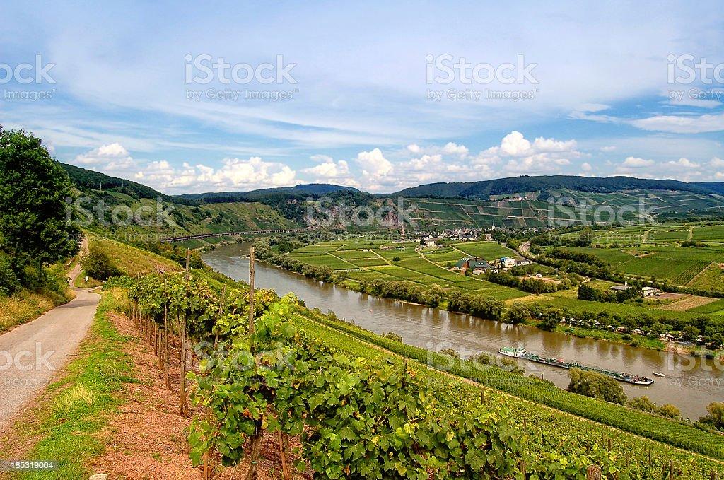 Vineyard at Mosel river (Germany) stock photo
