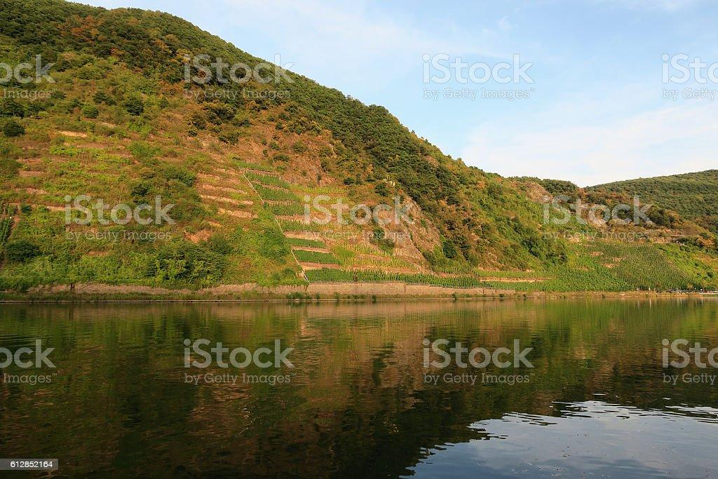 vineyard at mosel valley stock photo