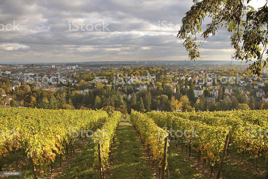 Vineyard at Neroberg  hill stock photo