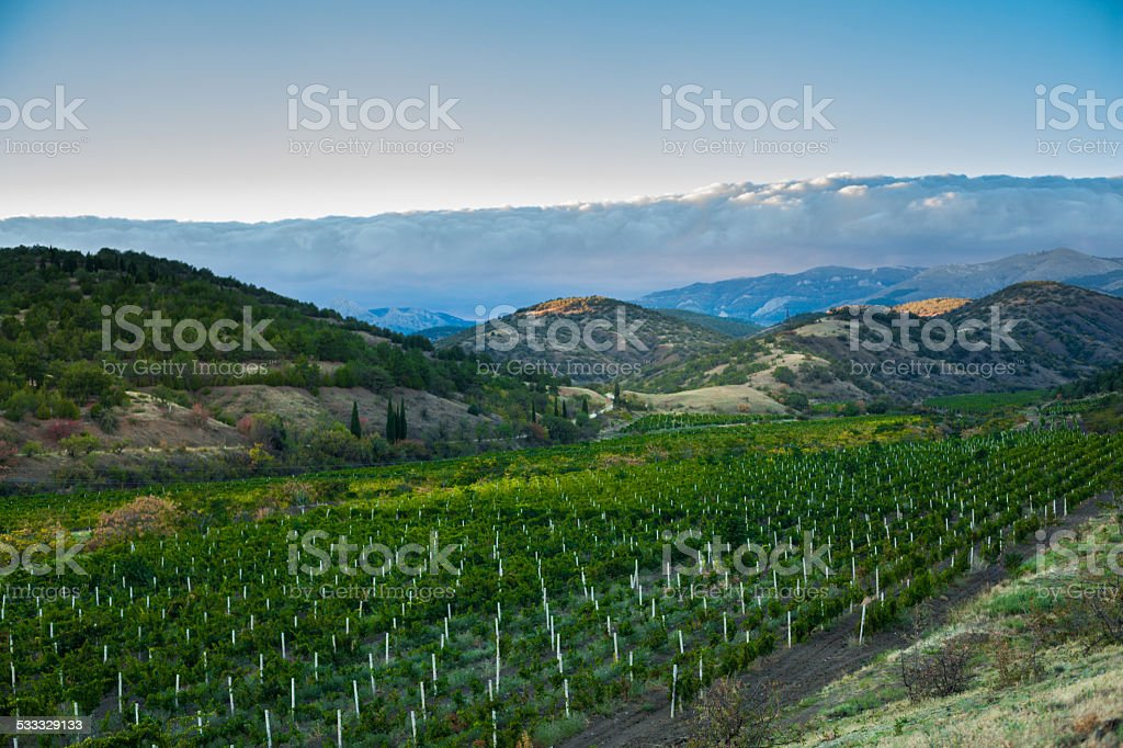vineyard at the foot of the mountain stock photo