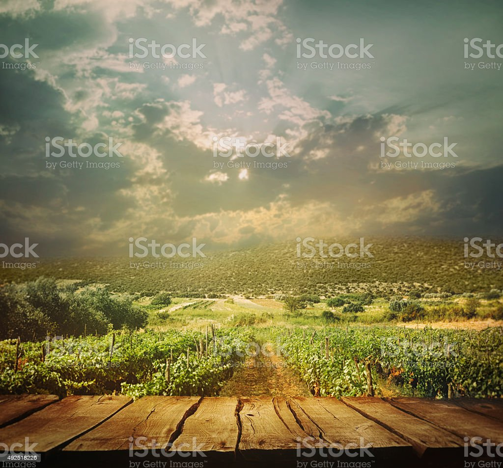 Vineyard background stock photo