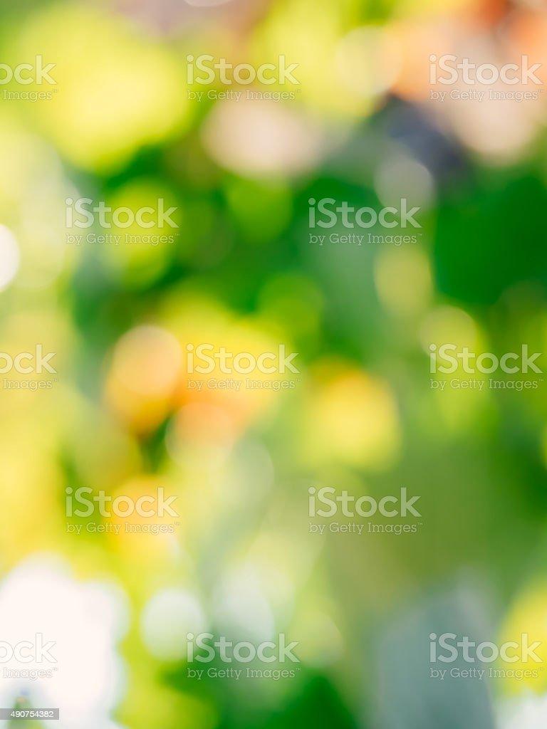 Vineyard blurry defocused background stock photo