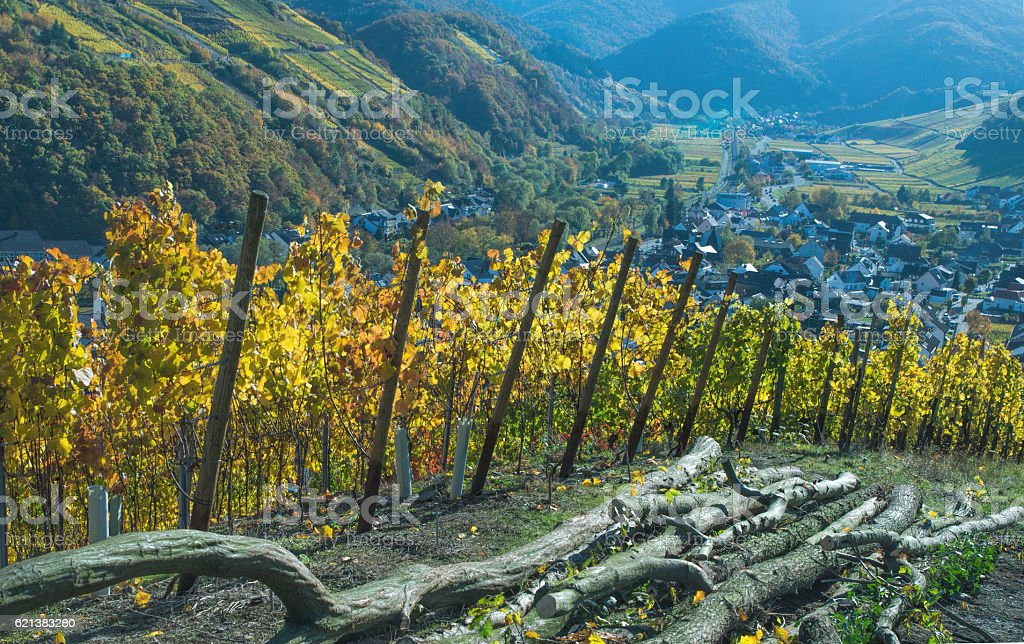 Vineyard by Dernau-Ahr stock photo