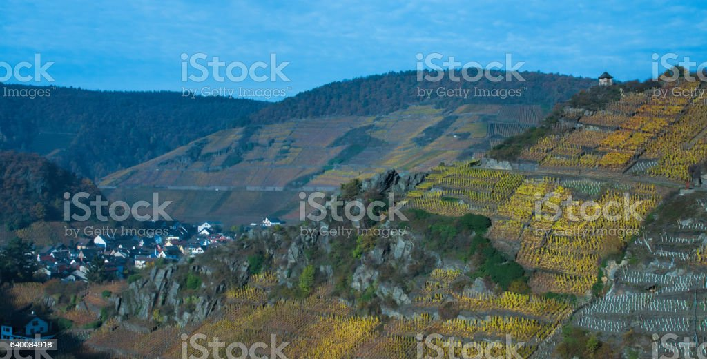 Vineyard by Mayschoss stock photo