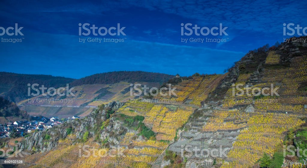 Vineyard by Mayschoss stock photo
