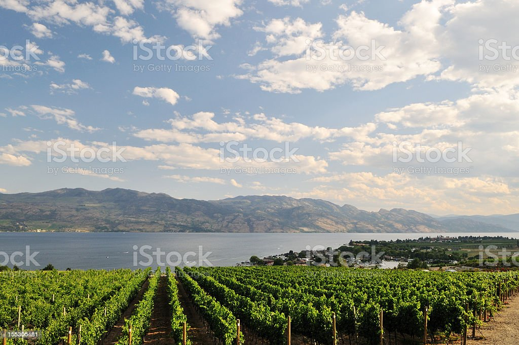 vineyard by Okanagan Lake near Kelowna stock photo