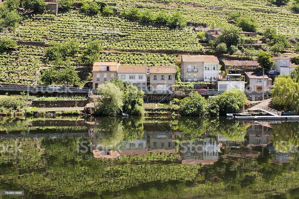 Vineyard by the river bank royalty-free stock photo