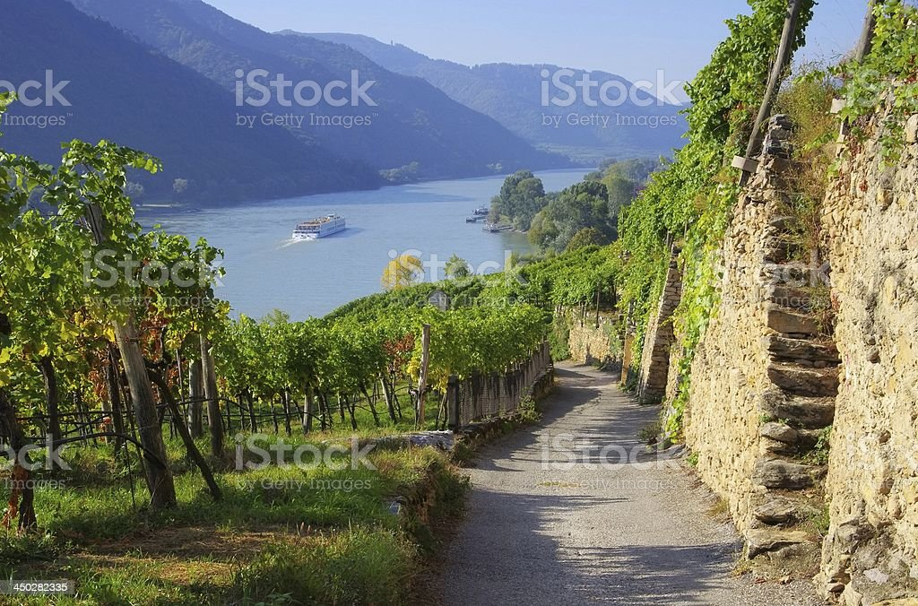 A vineyard by the riverside with a trail going through it stock photo