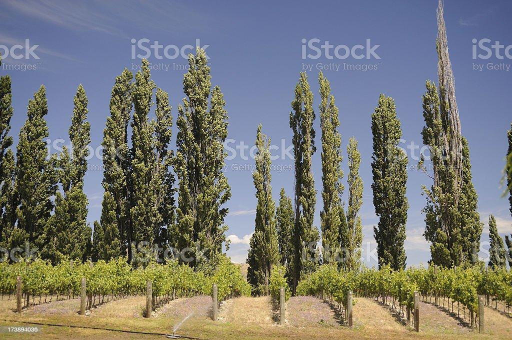 Vineyard Central Otago royalty-free stock photo