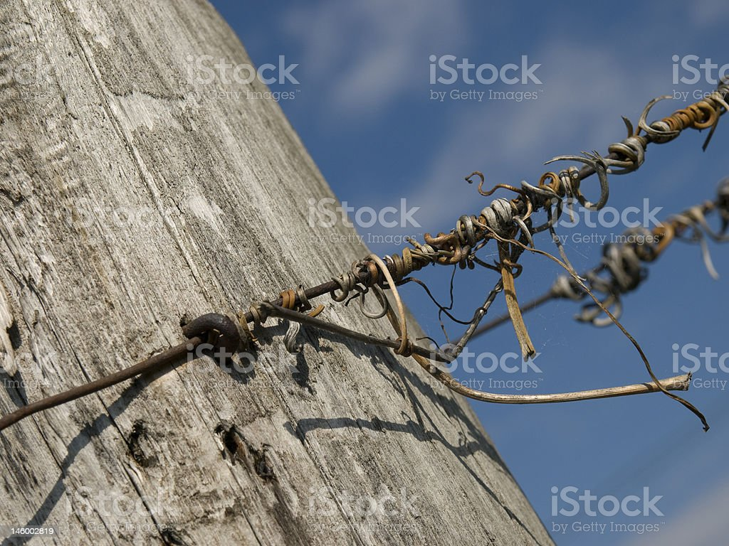 Vineyard Column  With Wire stock photo