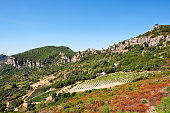 Vineyard cultivated in the high mountains