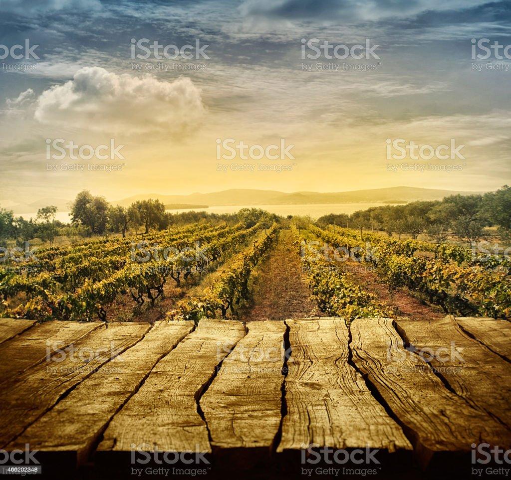 Vineyard design stock photo