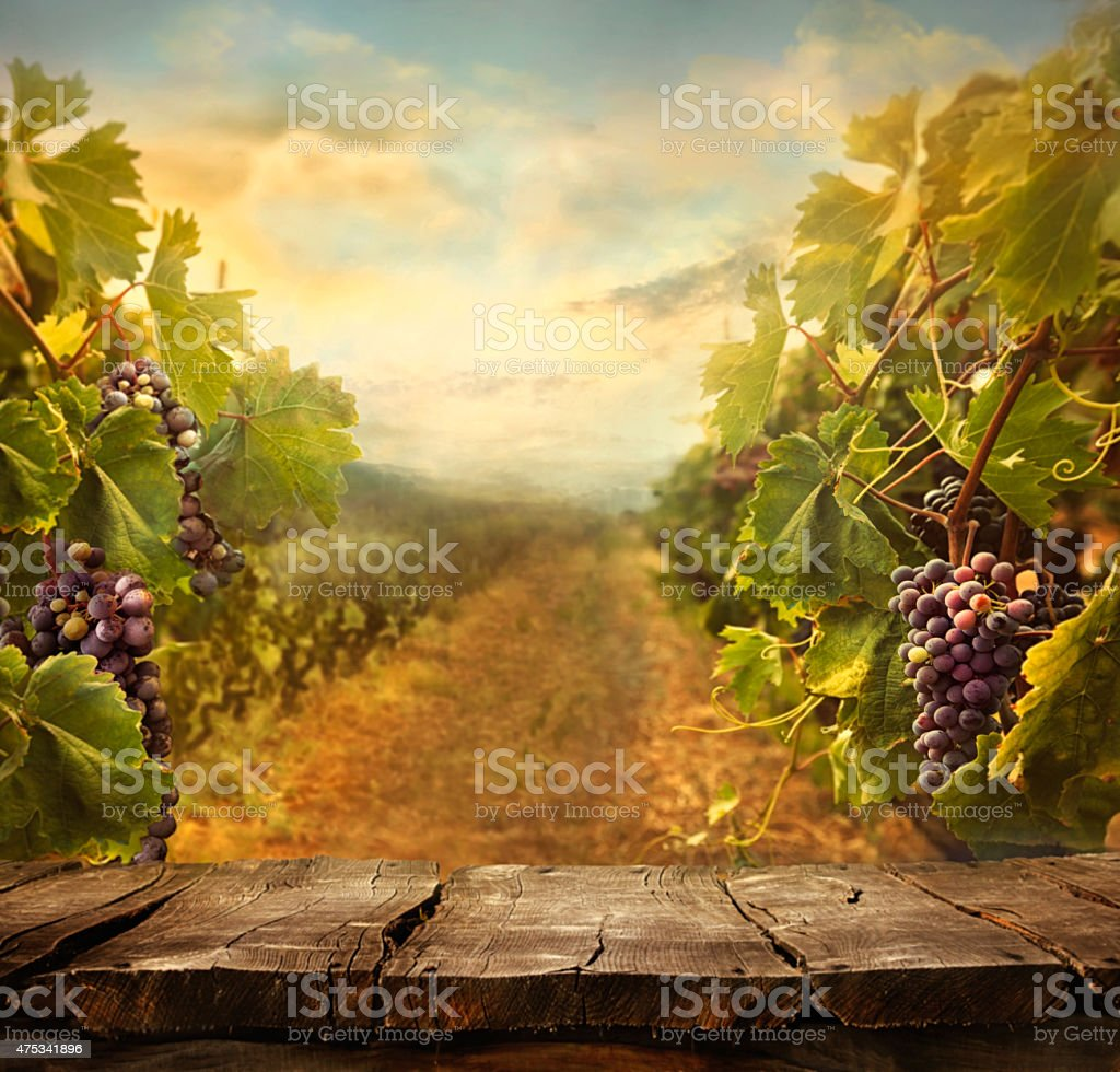 Vineyard design stock photo