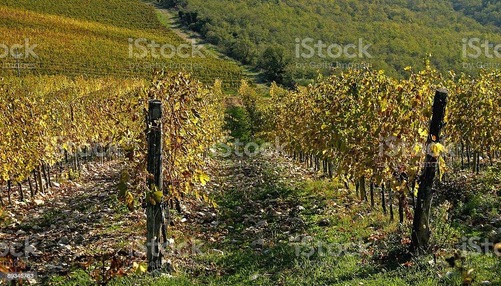 Vineyard Details royalty-free stock photo