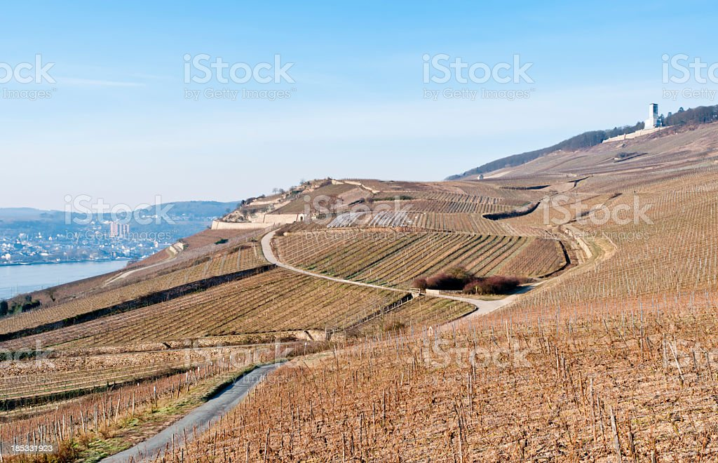 Vineyard during a sunny morning in winter stock photo