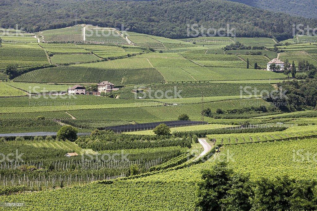 Vineyard estate stock photo