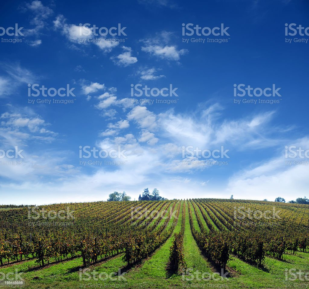 Vineyard Farm with Clouds Background - XXXXXLarge stock photo